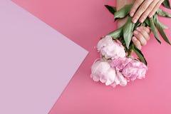 Mains femelles avec les pivoines roses de prise de manucure photos stock