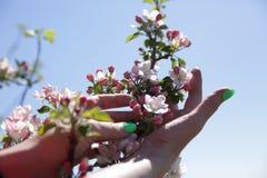 Mains femelles tenant les fleurs roses d'un pommier fleurissant au printemps d'un pommier Le concept du respect pour photographie stock libre de droits