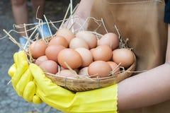 Mains femelles tenant les oeufs et la paille crus dans le panier, plan rapproché, utilisant le handgrove jaune images libres de droits