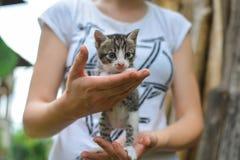 Mains femelles tenant un chaton avec des yeux bleus dans leurs mains Photos libres de droits