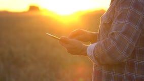 Mains hautes étroites de producteurs avec le comprimé dans le domaine de blé au coucher du soleil r Homme banque de vidéos