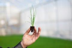 Mains humaines tenant la jeune usine avec le sol au-dessus du fond brouillé de nature La jeune plante de CSR de jour d'environnem Image libre de droits