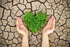 Mains jugeant un arbre disposé comme forme de coeur sur la terre criquée Images libres de droits