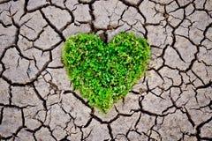 Mains jugeant un arbre disposé comme forme de coeur sur la terre criquée Photo stock