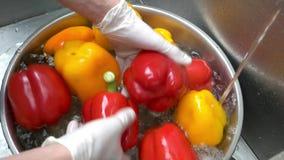 Mains lavant le paprika banque de vidéos