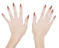 mains manicured photo libre de droits