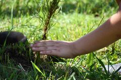Mains plantant un arbre Photos stock