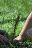 Mains plantant un arbre Photos libres de droits
