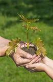 Mains plantant un petit arbre Photos stock