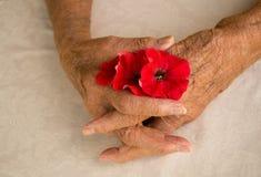Mains pliées d'un aîné féminin plus âgé Images libres de droits