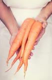 Mains pluses âgé tenant les carots frais avec le style de vintage Photos stock