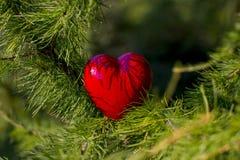 Mains pour des adultes et des enfants avec le coeur rouge, soins de santé, amour, donation d'organe photo stock