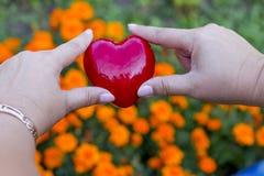 Mains pour des adultes et des enfants avec le coeur rouge, soins de santé, amour, donation d'organe images stock