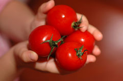 Mains retenant des tomates-cerises photo stock