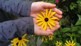 Mains retenant la fleur Image stock