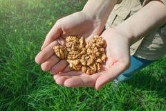 Mains retenant la noix Photos libres de droits