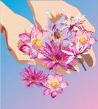 Mains retenant le lotus Photo libre de droits