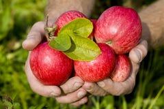 Mains retenant les pommes rouges Photographie stock libre de droits