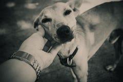 Mains serrant et tenant la tête de chien Image libre de droits