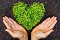 Mains tenant l'arbre en forme de coeur vert Photographie stock libre de droits