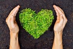 Mains tenant l'arbre en forme de coeur vert Photos libres de droits