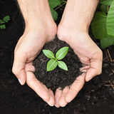 Mains tenant la jeune plante verte avec le sol Photographie stock