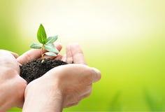 Mains tenant la jeune plante verte avec le sol photos libres de droits
