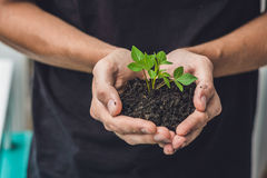 Mains tenant la jeune plante verte, sur le fond noir Le concept de l'écologie, protection de l'environnement Images stock