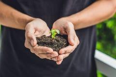 Mains tenant la jeune plante verte, sur le fond noir Le concept de l'écologie, protection de l'environnement Photos libres de droits