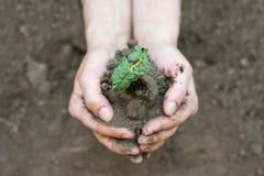Mains tenant la jeune usine avec le sol Concept d'écologie Photo libre de droits
