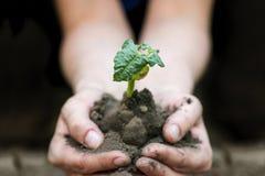 Mains tenant la jeune usine avec le sol Concept d'écologie Photographie stock