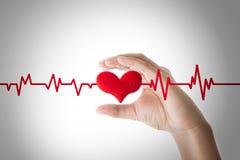 Mains tenant le coeur rouge avec la ligne d'ecg sur le fond blanc Photos libres de droits