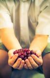 Mains tenant le fruit de groseille à maquereau d'air frais Image libre de droits