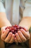 Mains tenant le fruit de groseille à maquereau d'air frais Image stock