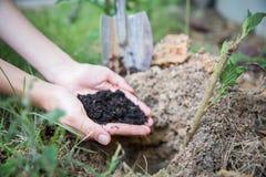 Mains tenant le sol dans le domaine agricole photo stock