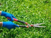 Mains tenant les ciseaux de jardinage sur l'herbe verte C de jardinage Photos stock