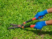 Mains tenant les ciseaux de jardinage sur l'herbe verte C de jardinage Photos libres de droits