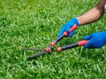 Mains tenant les ciseaux de jardinage sur l'herbe verte C de jardinage Photographie stock