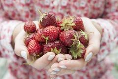 Mains tenant les fraises fraîches photo libre de droits