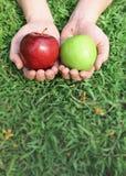 Mains tenant les pommes rouges et vertes Image libre de droits