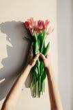 Mains tenant les tulipes roses dans la lumière molle de matin sur rustique blanc Photographie stock libre de droits
