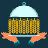 Mains tenant un plat de portion avec des oreilles de blé Images libres de droits