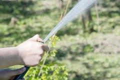 Mains versées du tuyau de l'herbe Photo libre de droits