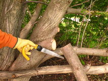 Maintenance of a tree. Royalty Free Stock Photo