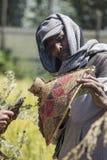 Maintenir d'abeille dans l'Ethiopie Photographie stock libre de droits