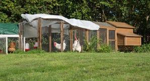 Maintenir des poulets dans le jardin images stock