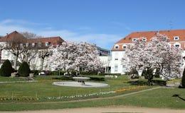 Mainz Uniklinik, Germany. Spring park in Uniklinik in Mainz, Germany Stock Photo
