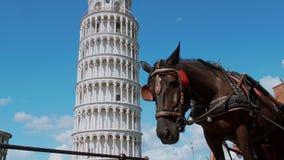 A maioria de atração turística famosa em Pisa - a torre inclinada video estoque