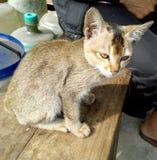 A maioria de gato bonito do bichano no banco Fotos de Stock