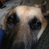 Mais amor de filhote de cachorro fotos de stock